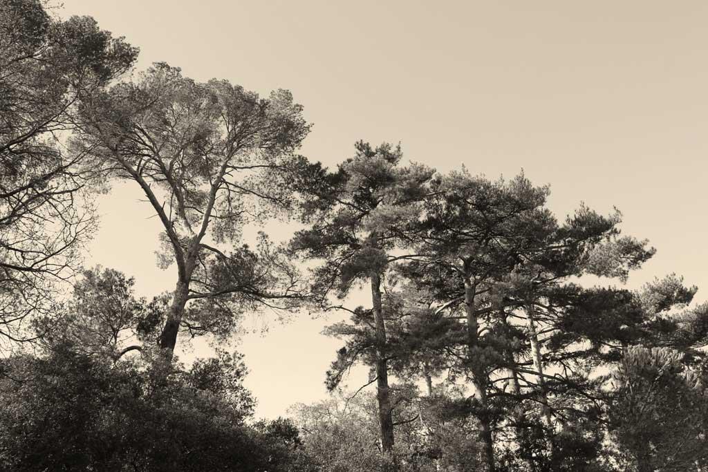 Traverses - la forte présence de l'espace boisé classé - Le bois de la Chaumière