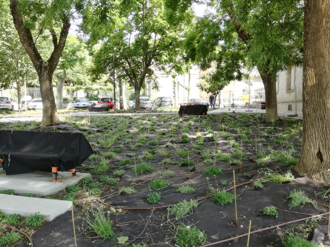 Traverses - début des plantations