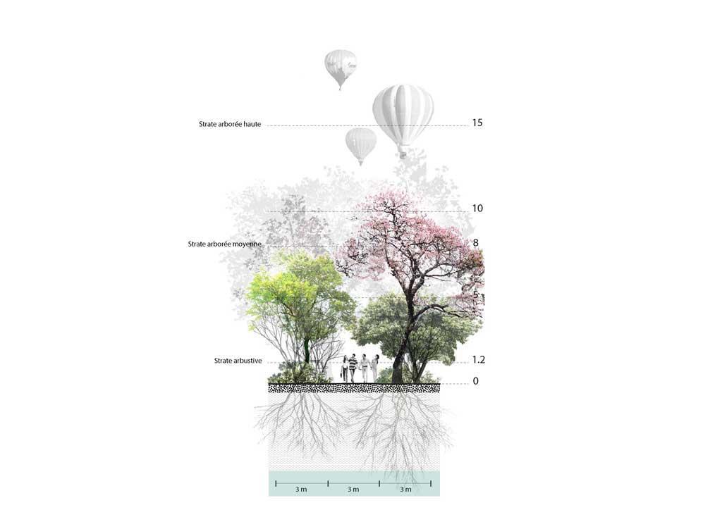 Traverses - Coupe de principe sur le traitement paysager des allées principales