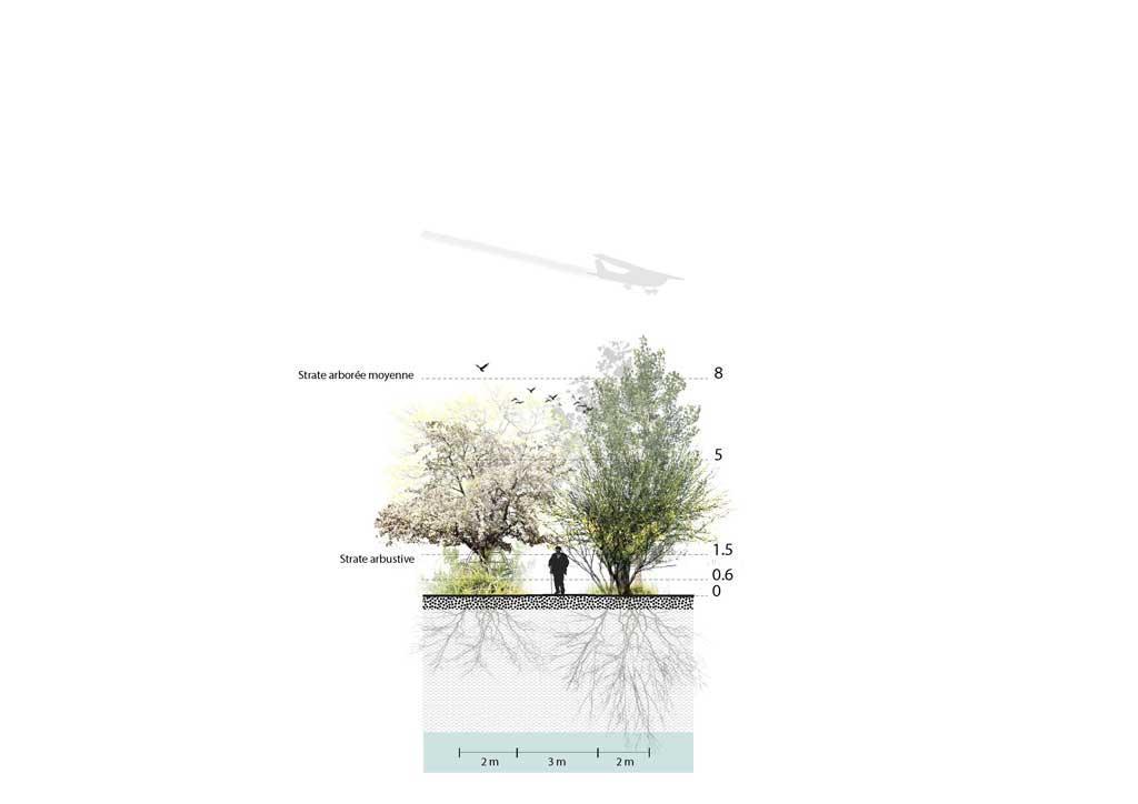 Traverses - Coupe de principe sur le traitement paysager des allées secondaires