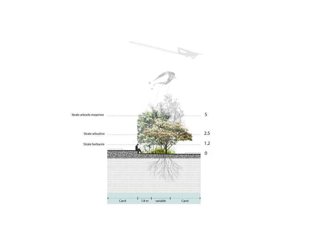 Traverses - Coupe de principe sur le traitement paysager des carrés