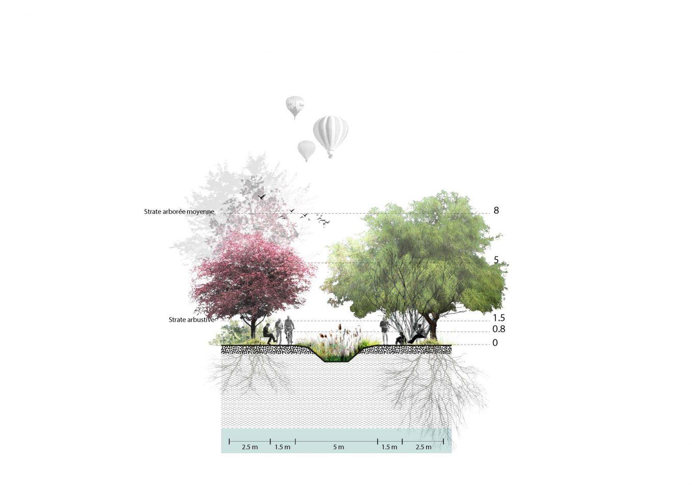 Traverses - Coupe de principe sur le traitement paysager des noues