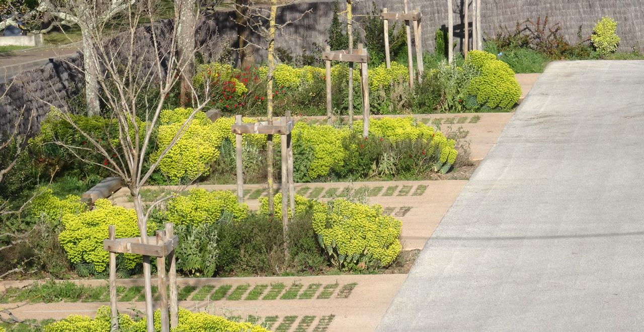 Traverses - floraison en mars
